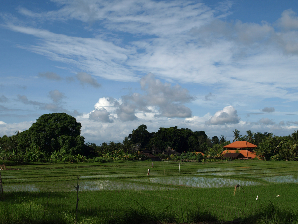 The Subak as Bali's unique rice farming system, By: Grassroots