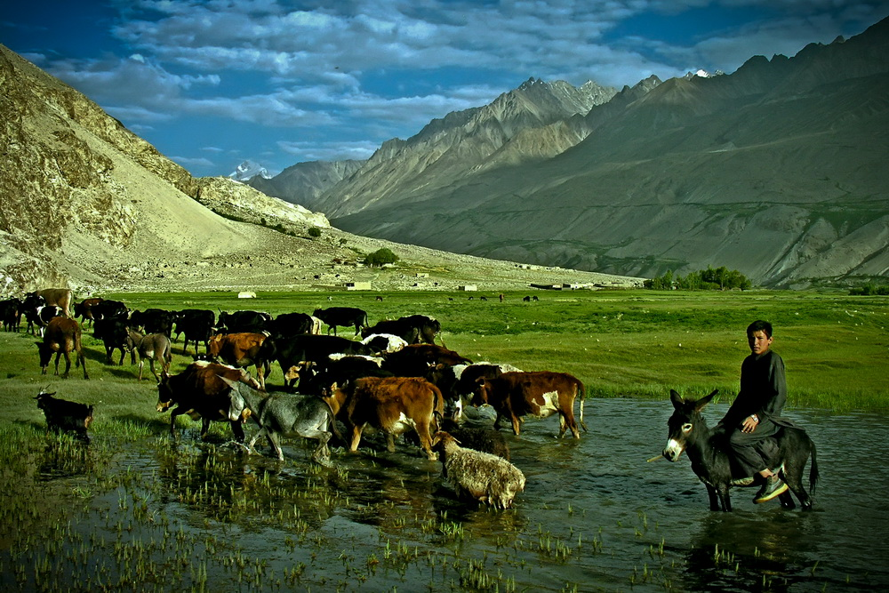 A young Wakhi shepherd from Ghoz Khan, the Wakhan Corridor, with his cattle