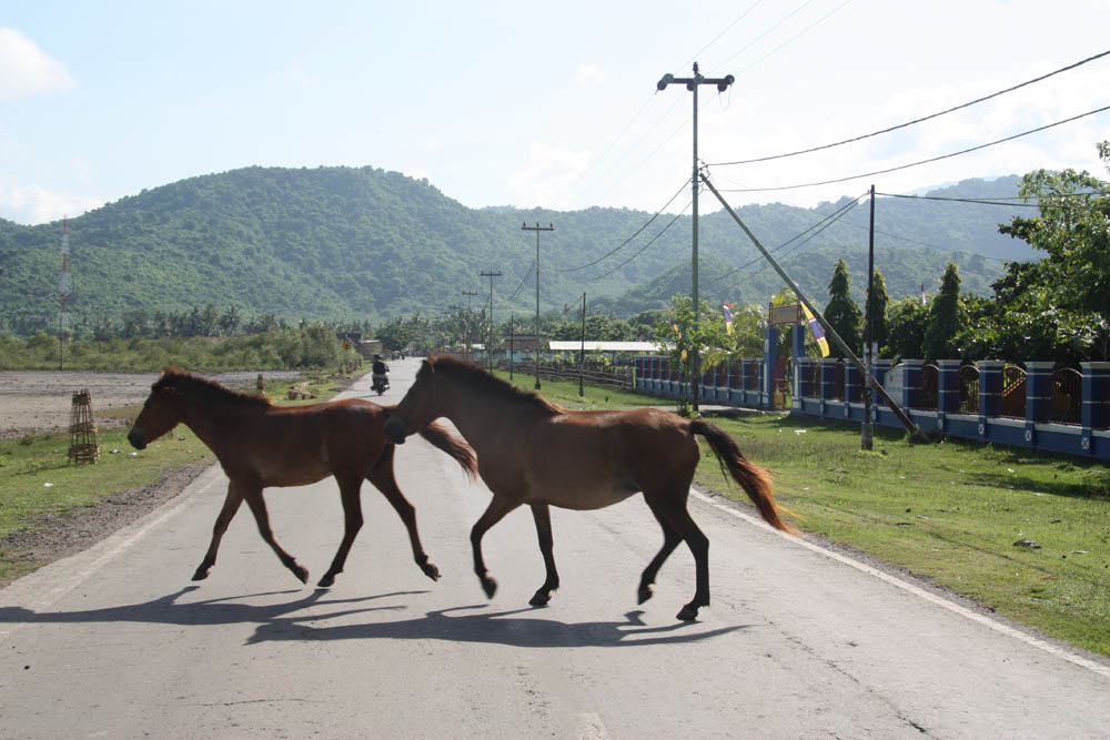 Wilde horses on the Road, By: Ed Caffin