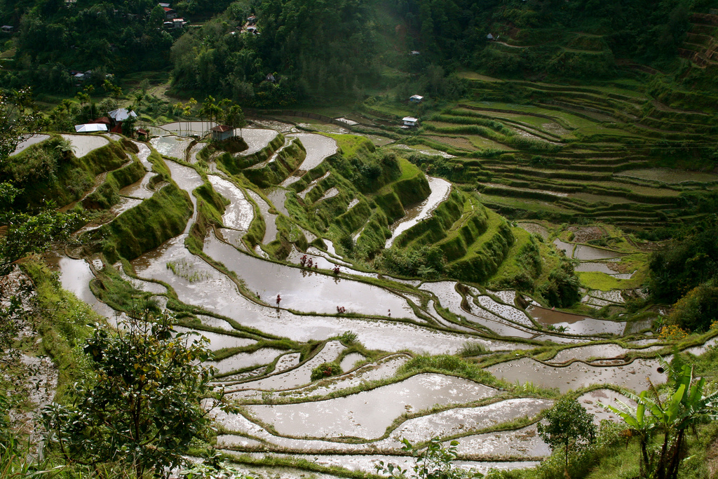 Banaue Rice Terraces, By: Jon Rawlinson