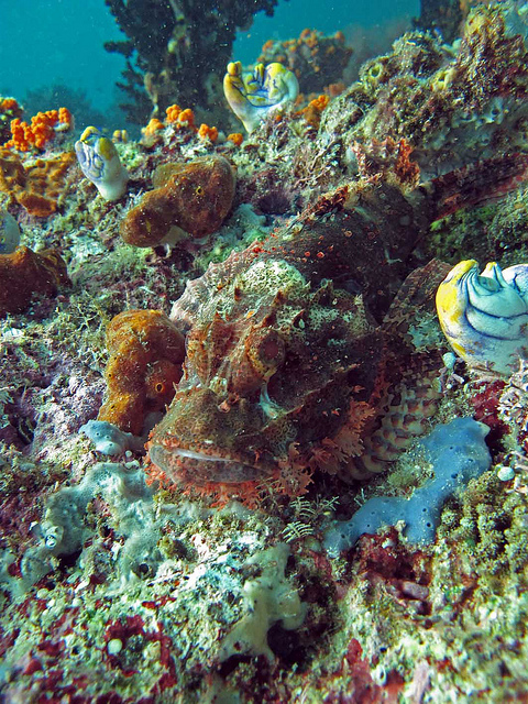 Can you spot the scorpion fish? By: Lakshmi Sawitri
