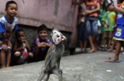 masked-monkey