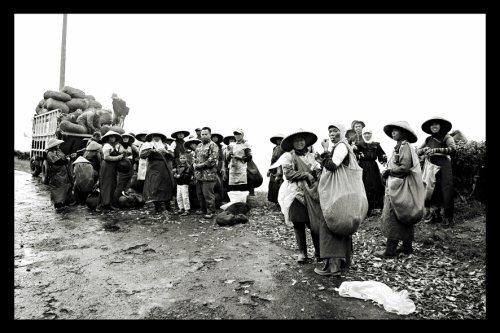 Workers Carrying Tea By Noorman Wijaksana