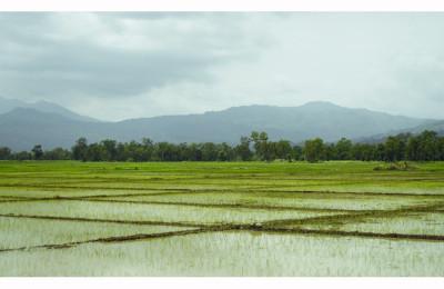 Timor Leste Sawah view