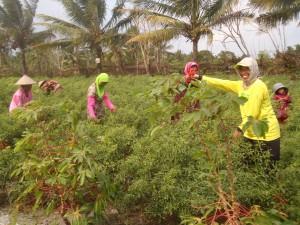 farmers Kulon Progo