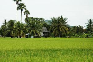 Daily life between Kep and Kampot, By: Lori