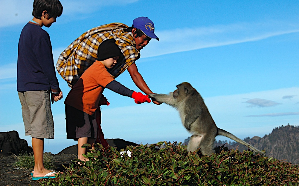 We are not the only ones enjoying Rinjani, By: Boharo Adventures