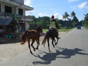 Sumbamese Sandalwood horses, By: Wybe