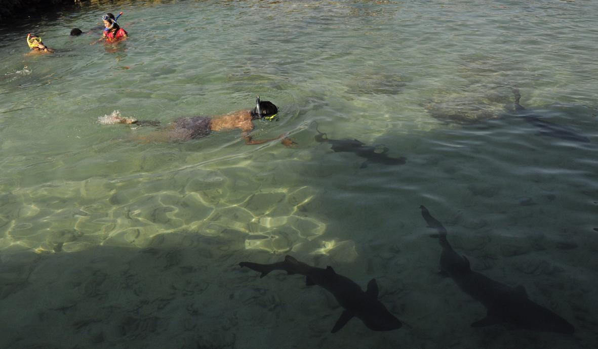In the Shark Pool, Karimunjawa