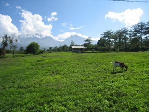 View on Rinjani near Senaru