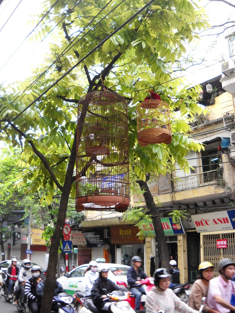 Birds singing over traffic noises in the streets of Hanoi, By Gabi Yetter