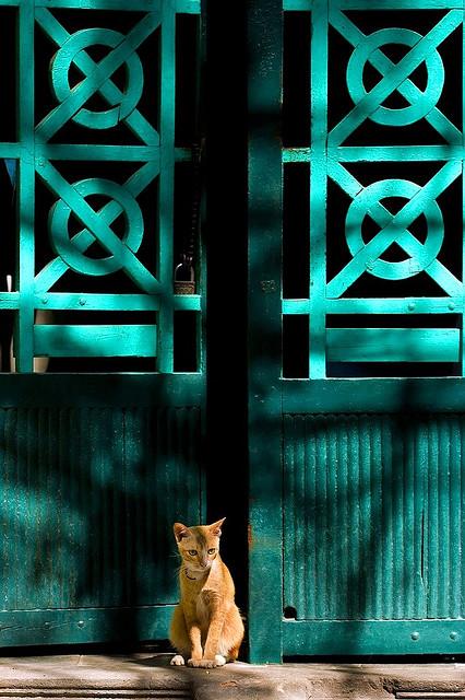 A Vietnamese cat sits pretty, By: Bui Linh Ngan