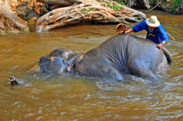 Maesa Elephant Camp is a must, By: Dennis Jarvis