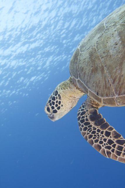 A Tubbataha turtle says hello, By: Jayvee Fernandez