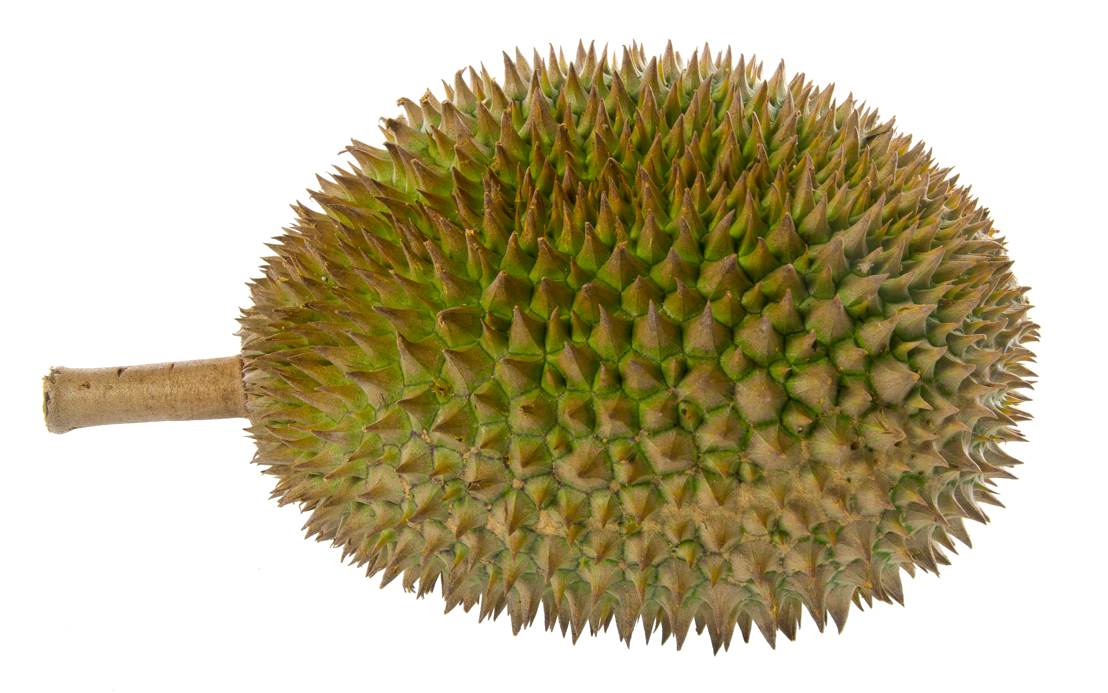 can fruit provoke  the dizzying durian latitudes hang in there clip art smiley face hang in there clip art dogs